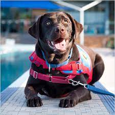 Photo of an assistance dog
